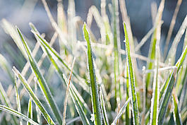 Frost covering grass